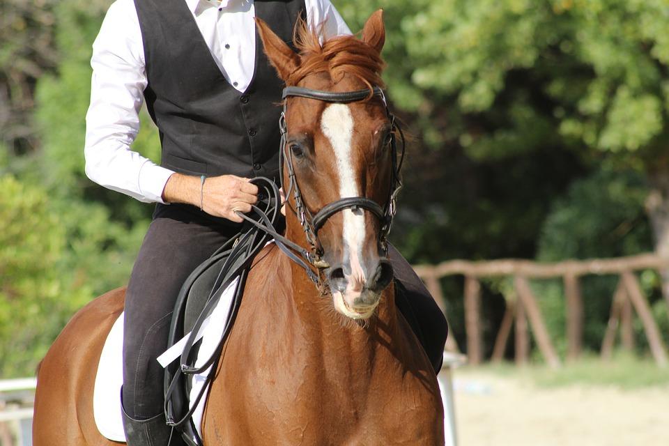 montar a caballo (4)